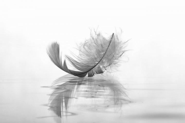 Trauer - Eine weiß-graue Feder liegt auf der Wasseroberfläche. Die Wasseroberfläche ist auch weiß-grau. Die Feder spiegelt sich darin. Der Hintergrund ist weiß.